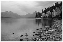 Lake McDonald shores in autum. Glacier National Park ( black and white)