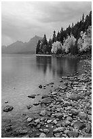 Lake McDonald lakeshore at dusk with autum foliage. Glacier National Park ( black and white)