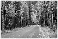 Road surrounded by fall foliage in autumn. Glacier National Park ( black and white)