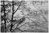 Tree branches blurred by wind, Lake McDonald. Glacier National Park ( black and white)