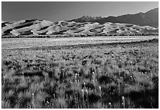 Wildflowers, grass prairie and dunes. Great Sand Dunes National Park, Colorado, USA. (black and white)