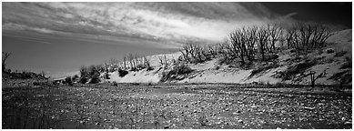 Dry wash and dunes. Great Sand Dunes National Park and Preserve (Panoramic black and white)