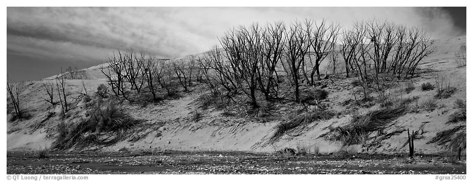 Dune edge with dead trees. Great Sand Dunes National Park and Preserve (black and white)