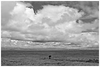 Solitary tree on prairie below cloud. Great Sand Dunes National Park, Colorado, USA. (black and white)