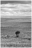 Lone tree and flatland. Great Sand Dunes National Park, Colorado, USA. (black and white)