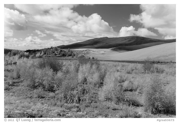 Riparian habitat along Medano Creek in autumn. Great Sand Dunes National Park and Preserve (black and white)