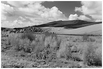 Riparian habitat along Medano Creek in autumn. Great Sand Dunes National Park, Colorado, USA. (black and white)