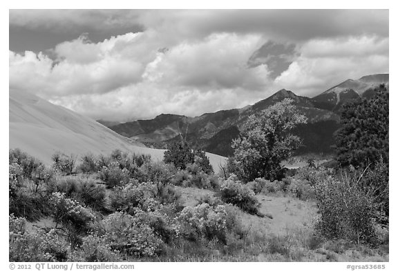 Autumn color on Escape Dunes. Great Sand Dunes National Park and Preserve (black and white)