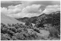 Autumn color on Escape Dunes. Great Sand Dunes National Park, Colorado, USA. (black and white)