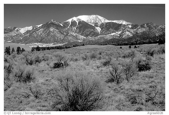 Desert-like sagebrush and snowy Sangre de Cristo Mountains. Great Sand Dunes National Park and Preserve (black and white)