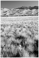 Grass and dunes, morning. Great Sand Dunes National Park, Colorado, USA. (black and white)