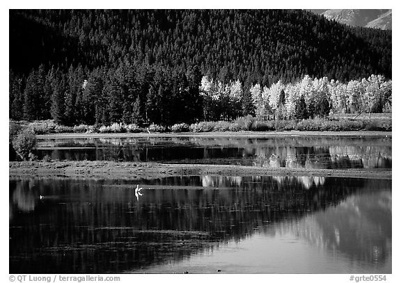 Fall foliage and reflections of Mt Moran in Oxbow bend. Grand Teton National Park (black and white)