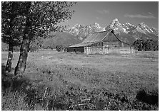 Trees, pasture and Old Barn on Mormon row, morning. Grand Teton National Park, Wyoming, USA. (black and white)