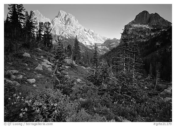 Meadow, wildflowers, and peaks at sunset. Grand Teton National Park (black and white)