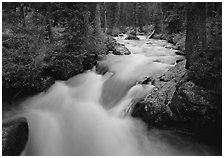 Cascade Creek and dark forest. Grand Teton National Park ( black and white)
