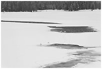 Frozen Oxbow Bend with trumpeters swans. Grand Teton National Park, Wyoming, USA. (black and white)