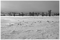 Snowy Antelope flats with snowdrift. Grand Teton National Park, Wyoming, USA. (black and white)