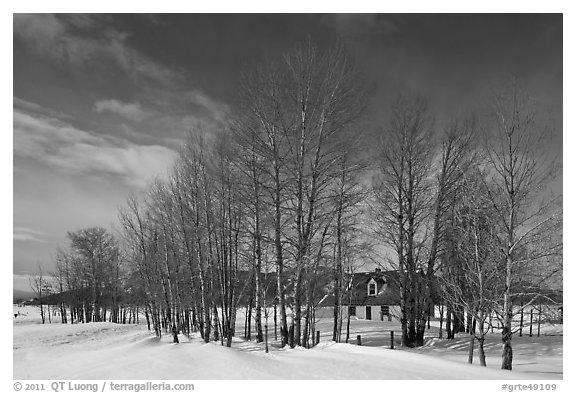 Bare cottonwoods and Moulton homestead. Grand Teton National Park (black and white)