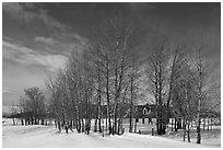Bare cottonwoods and Moulton homestead. Grand Teton National Park, Wyoming, USA. (black and white)