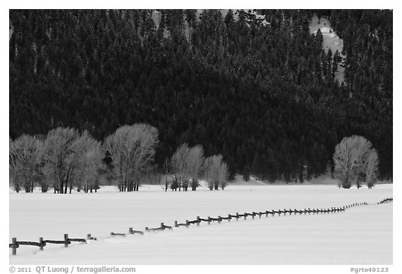 Long fence, cottonwoods, and hills in winter. Grand Teton National Park, Wyoming, USA.