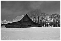 Wooden barn and cottonwoods in winter. Grand Teton National Park, Wyoming, USA. (black and white)