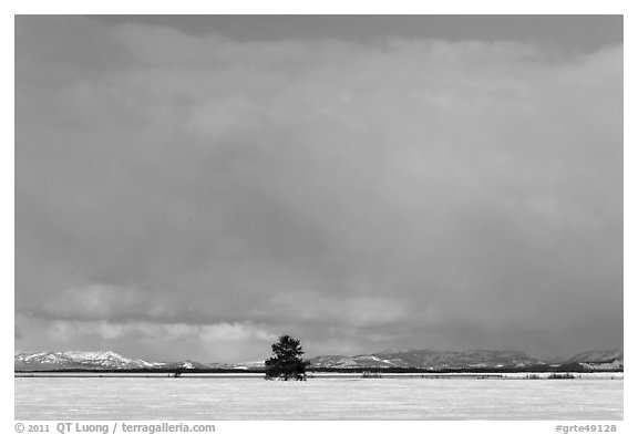 Lone tree and distant mountains in winter. Grand Teton National Park (black and white)