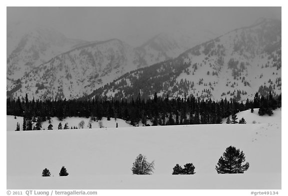 Trees, snowfield, and base of mountains at dusk. Grand Teton National Park (black and white)