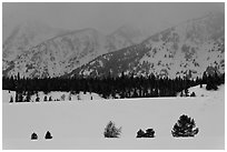 Trees, snowfield, and base of mountains at dusk. Grand Teton National Park ( black and white)