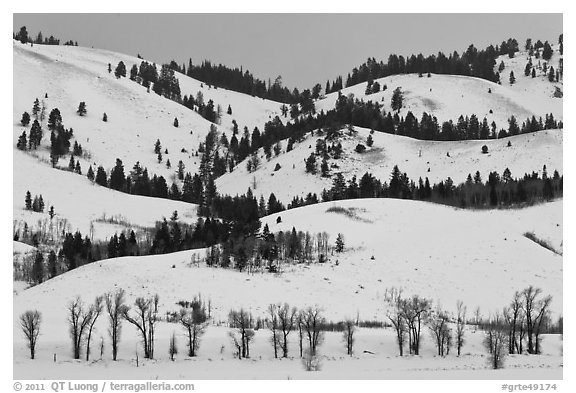Hills and trees, Blacktail Butte in winter. Grand Teton National Park (black and white)