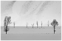 Bare trees and butte in winter. Grand Teton National Park, Wyoming, USA. (black and white)