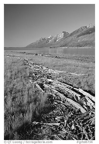 Debris marking high water limit for Jackson Lake, morning. Grand Teton National Park (black and white)