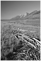 Debris marking high water limit for Jackson Lake, morning. Grand Teton National Park, Wyoming, USA. (black and white)