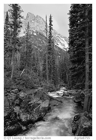 Cascade Creek and Tetons. Grand Teton National Park (black and white)