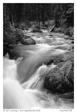 Cascade Creek flowing over rocks. Grand Teton National Park (black and white)