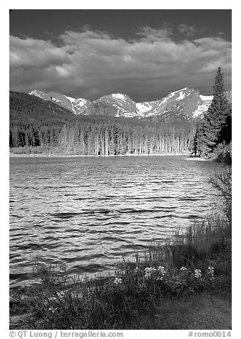 Windy morning, Sprague Lake. Rocky Mountain National Park (black and white)