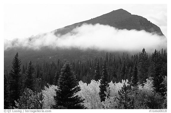Fog, trees, and peak, Glacier basin. Rocky Mountain National Park (black and white)