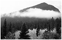 Fog, trees, and peak, Glacier basin. Rocky Mountain National Park ( black and white)