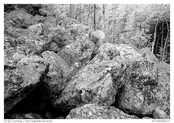 Field of large lichen-covered boulders and  aspens in fall foliage. Rocky Mountain National Park (black and white)