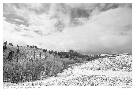 Aspens, snow, and clouds. Rocky Mountain National Park (black and white)