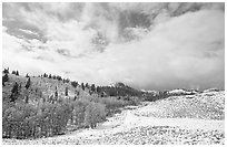 Aspens, snow, and clouds. Rocky Mountain National Park, Colorado, USA. (black and white)