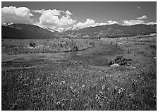 Wildflowers, meadow, and stream, Many Parks. Rocky Mountain National Park, Colorado, USA. (black and white)