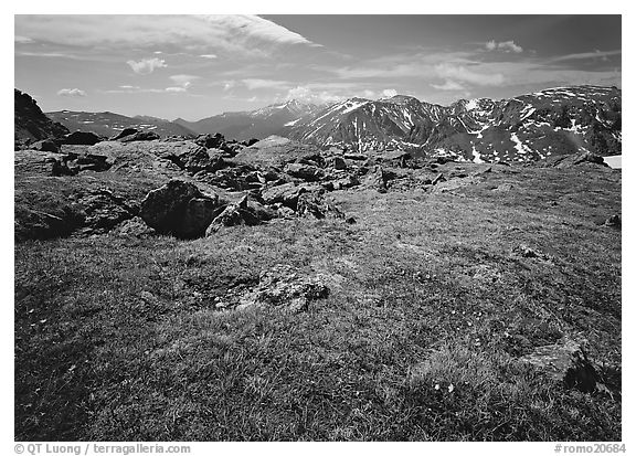 Alpine tundra near Trail Ridge Road in summer. Rocky Mountain National Park (black and white)
