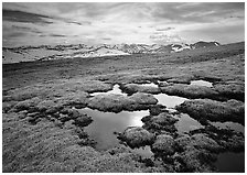 Alpine tundra and the Never Summer range in autumn. Rocky Mountain National Park, Colorado, USA. (black and white)