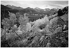 Aspens and mountain range in Glacier basin. Rocky Mountain National Park, Colorado, USA. (black and white)