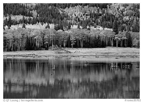 Mixed trees and  reflections. Rocky Mountain National Park (black and white)
