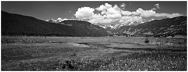 Summer wildflowers and stream in mountain meadow. Rocky Mountain National Park (Panoramic black and white)