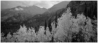Autumn mountain landscape. Rocky Mountain National Park (Panoramic black and white)