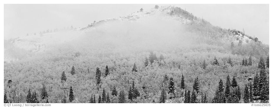 Forest with fall colors and early snow beneath fog-shrouded peak. Rocky Mountain National Park (black and white)