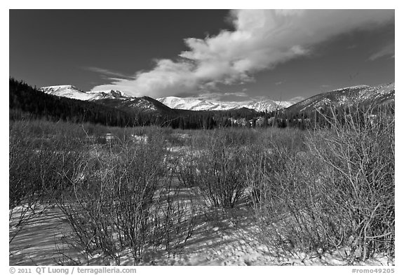 Willows near beaver pond in winter. Rocky Mountain National Park (black and white)