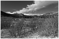Willows near beaver pond in winter. Rocky Mountain National Park, Colorado, USA. (black and white)
